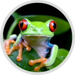 studioweb-html-icon