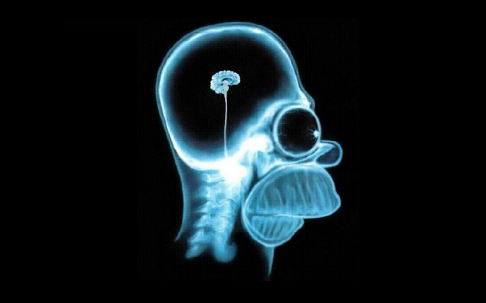 brain-homer-simpson.jpg